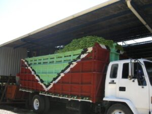 Banana truck at a Chiquita plantation near La Lima (HON) (source: private picture).
